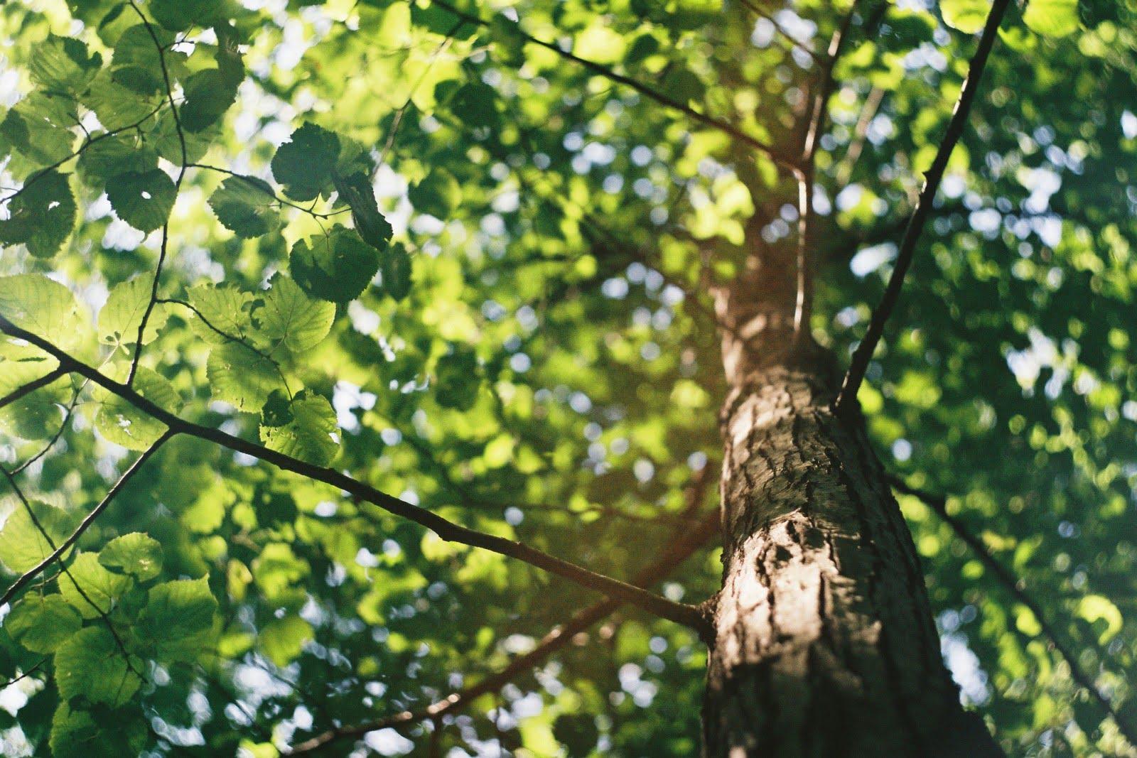 Sun-dappled tree